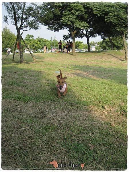 都會公園玩飛盤.01