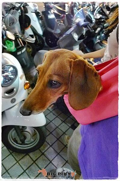 Ayumi寵物背巾.01