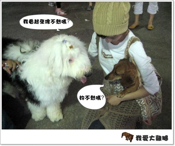 大狗狗s.01