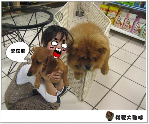 大狗狗s.03