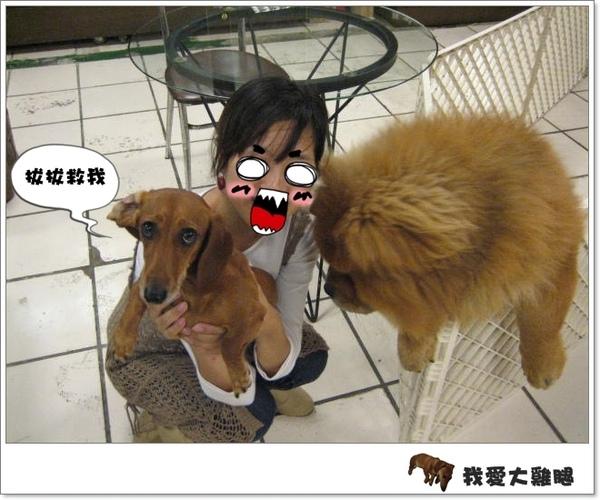 大狗狗s.04