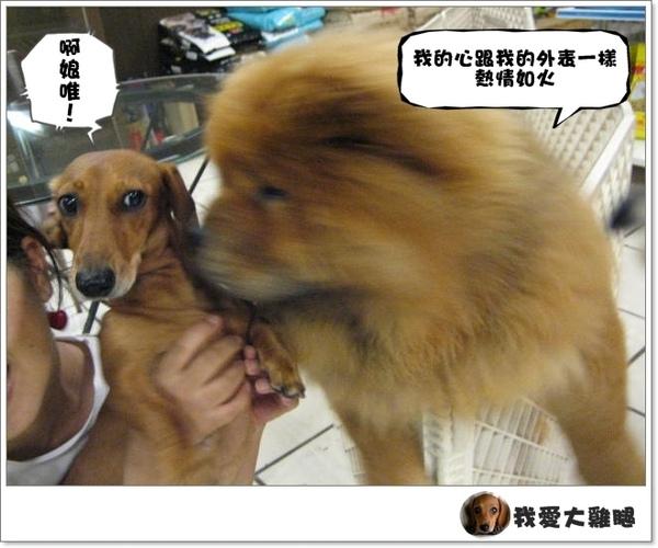 大狗狗s.05