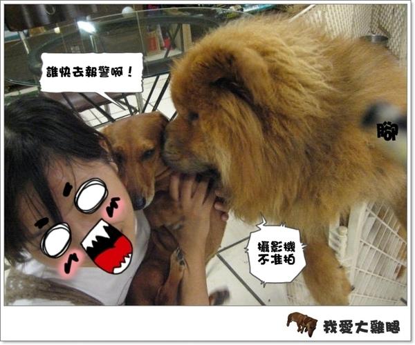 大狗狗s.06
