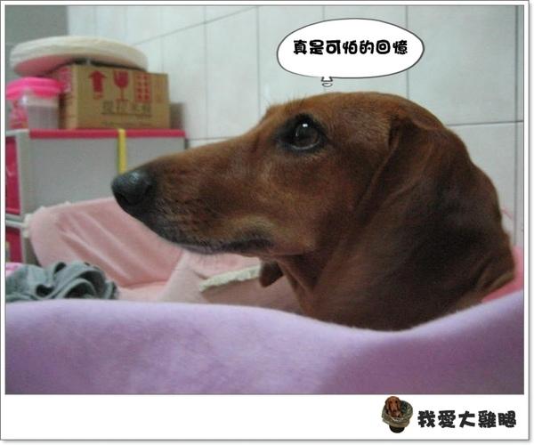 大狗狗s.07