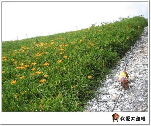DAY4花東縱谷.06