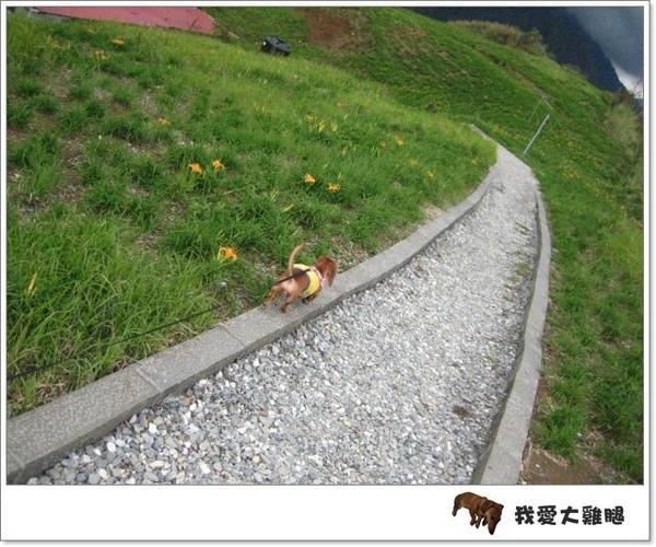 DAY4花東縱谷.13
