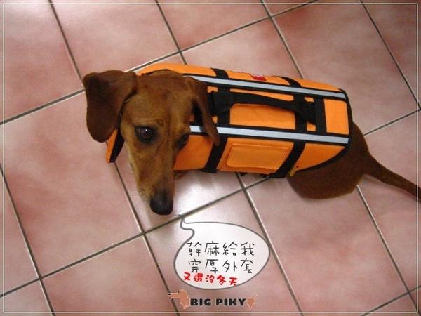 犬用救生衣.04