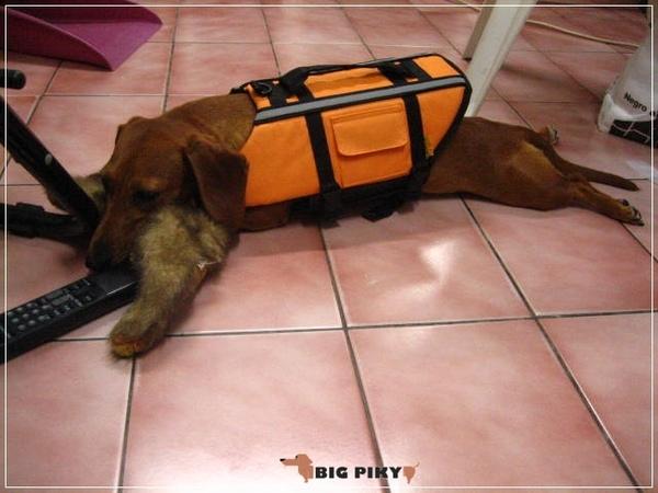 犬用救生衣.06