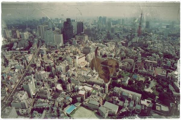 雞腿入侵東京.03