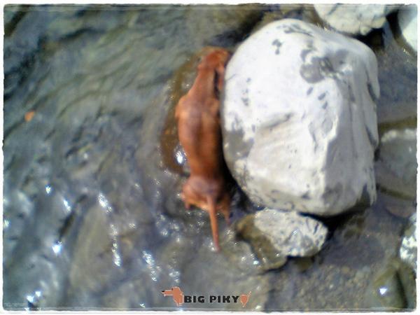 蓬萊護魚溪道.08