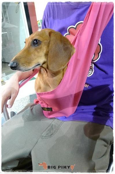 Ayumi寵物背巾.05