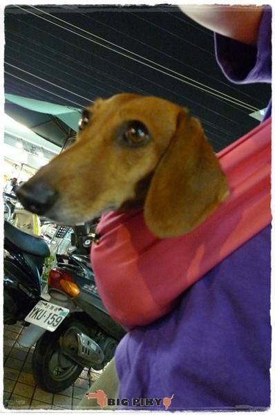 Ayumi寵物背巾.06