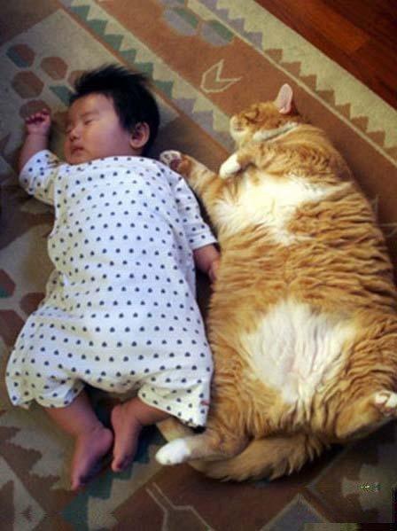 到底是貓像人還是人像貓ㄚ.jpg
