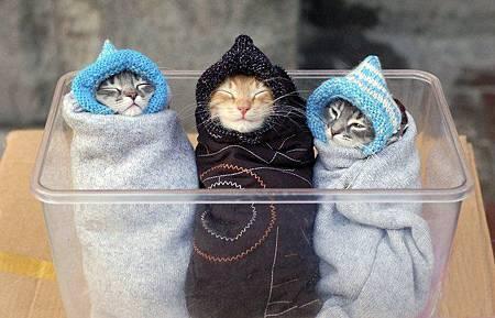 冷的凍未條了...要趕快穿衣服包緊緊唷 ^^.jpg