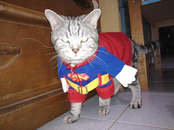 原來貓界也有超人01.jpg