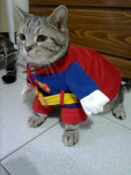 原來貓界也有超人03.jpg