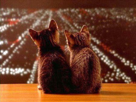 喵丸子-太郎-你的眼睛怎麼都不看著我啊-喵太郎 愛不是彼此相望而是彼此注視同一個方向.jpg