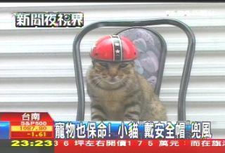 寵物也保命! 小貓「戴安全帽」兜風.jpg