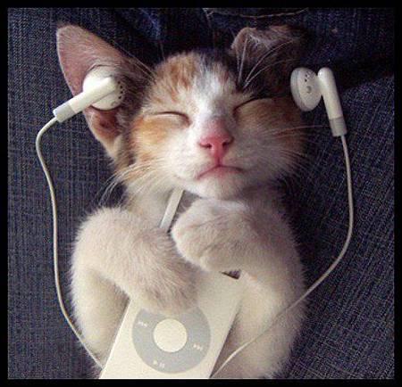 好享受的貓咪 ^^.jpg