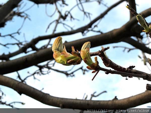 春日-素季節 素享受