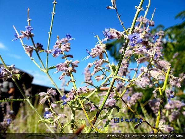 IMG_5020風中的花朵.jpg