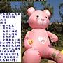 泰迪102 (大氣熊).JPG