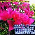 糖詩1108 (1).jpg