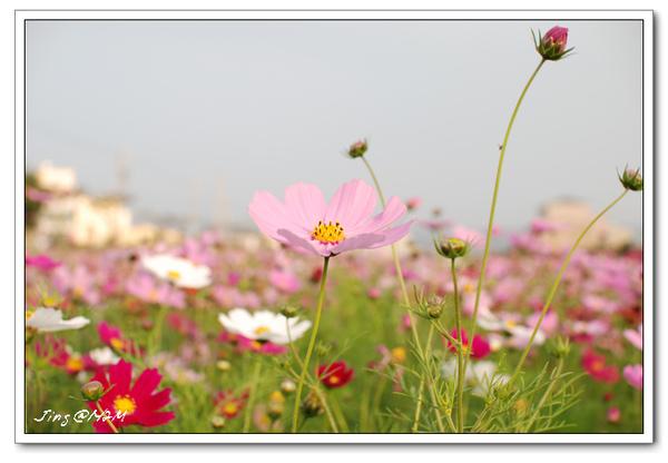 jin2010-0131-165442.jpg