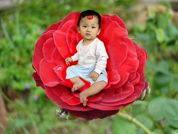 玫瑰花上的偉倫.jpg