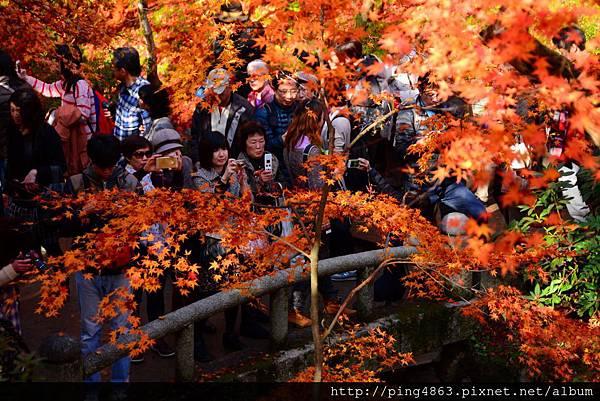 20141127京都賞楓第五天 332 (1024x683).jpg