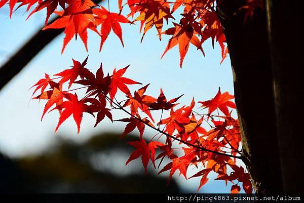 20141127京都賞楓第五天 509 (1024x683).jpg