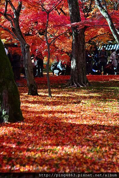20141127京都賞楓第五天 406 (683x1024).jpg