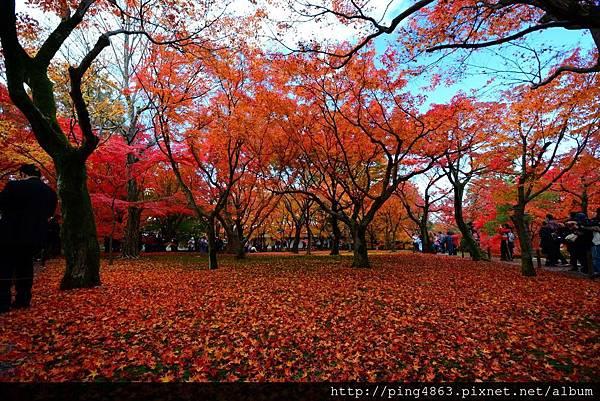 20141127京都賞楓第五天 417 (1024x683).jpg