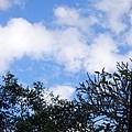 屏東 ─ 青島街的景苑