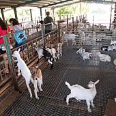 宜蘭 ─ 宜農牧場