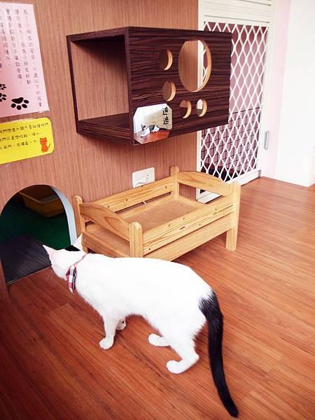 屏東 ─ 宅貓咖啡