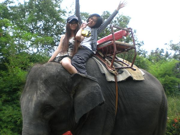 YA~~騎大象