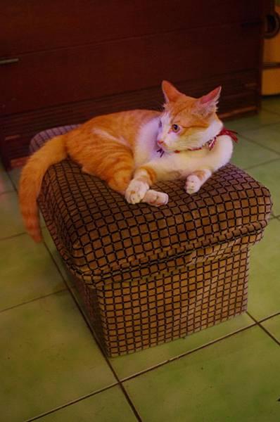 懶洋洋的貓.JPG
