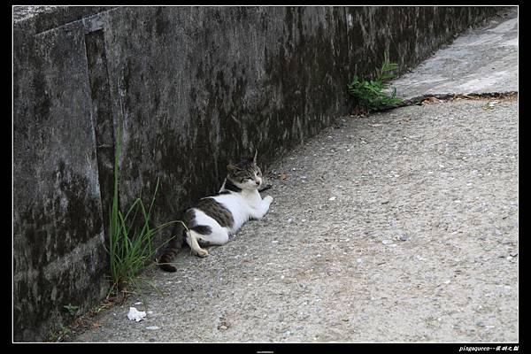 牆邊的貓.JPG