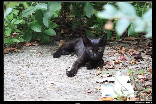 小小黑貓.JPG