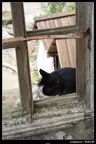 在窗台趴睡的貓.JPG