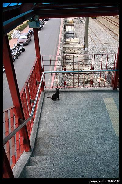 來到侯硐看到的第一隻貓.JPG