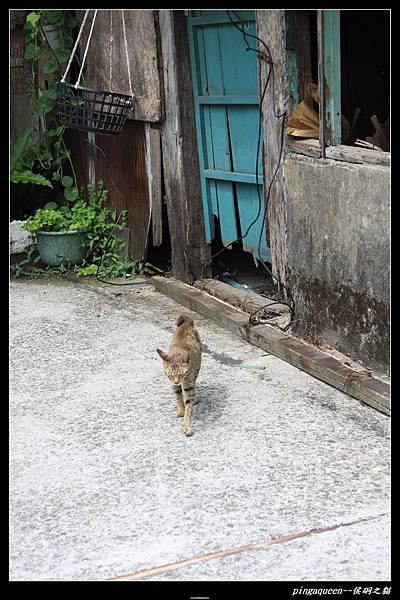 貓咪走過來~~.JPG