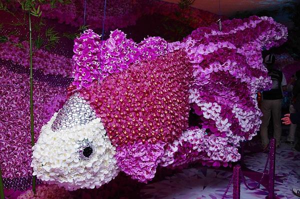 金魚花.jpg