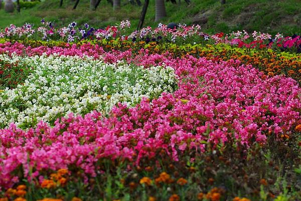 美麗的花叢.jpg