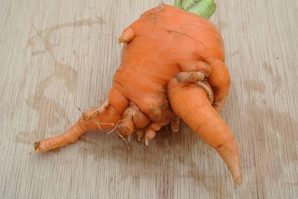農莊有機胡蘿蔔可愛造型8