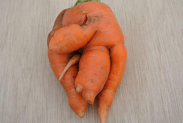 農莊有機胡蘿蔔可愛造型