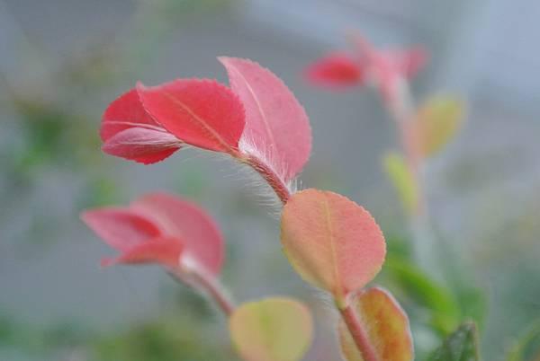 夏季美白聖品-小黃瓜