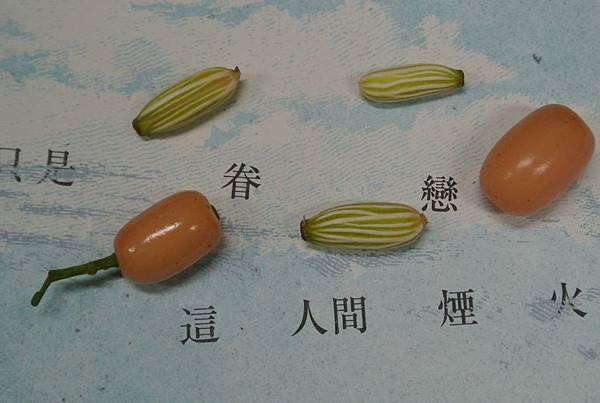 呂宋毛蕊木種子稜紋線條.JPG