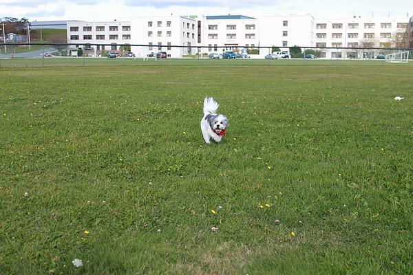 和Puffin玩丟球球